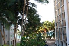 PALMERAS EN PUERTO RICO foto de archivo libre de regalías