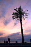 Palmeras en puesta del sol Fotografía de archivo
