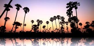 Palmeras en puesta del sol Imagen de archivo