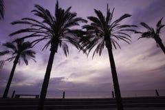 Palmeras en puesta del sol Imagenes de archivo