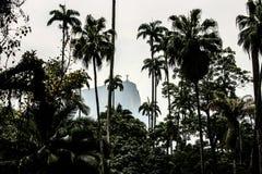 Palmeras en Río Fotos de archivo