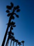 Palmeras en San Diego imagenes de archivo