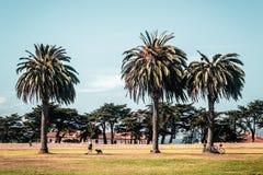 Palmeras en San Francisco Fotos de archivo