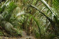 Palmeras en selva tropical Imagen de archivo libre de regalías