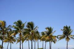 Palmeras en un cielo azul Fotografía de archivo