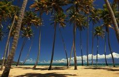 Palmeras en una playa Imágenes de archivo libres de regalías