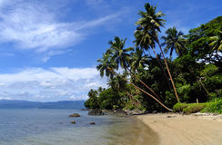 Palmeras en una playa, isla de Vanua Levu, Fiji Imagen de archivo libre de regalías