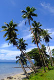 Palmeras en una playa, isla de Vanua Levu, Fiji Imágenes de archivo libres de regalías