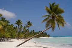Palmeras en una playa tropical Fotos de archivo libres de regalías