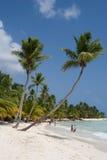 Palmeras en una playa tropical Foto de archivo libre de regalías