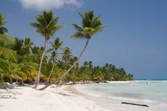 Palmeras en una playa tropical Imágenes de archivo libres de regalías