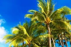 Palmeras en una playa tropical, el cielo en el fondo Summe Imagen de archivo