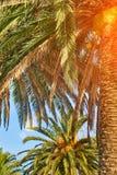 Palmeras exóticas en luz del sol imagen de archivo libre de regalías