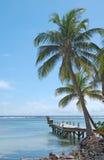 Palmeras Hang Over Oceanfront Jetty foto de archivo libre de regalías