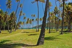 Palmeras hermosas en la playa de la bahía del resorte de Bequia Fotos de archivo