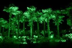 Palmeras iluminadas con la luz verde Fotografía de archivo libre de regalías