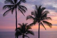 Palmeras - isla grande Imagenes de archivo