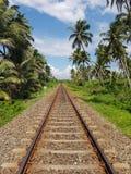 Palmeras a lo largo del ferrocarril imágenes de archivo libres de regalías