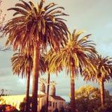Palmeras Los Ángeles imagen de archivo