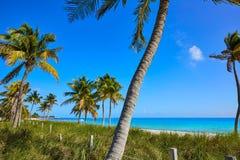 Palmeras los E.E.U.U. de la playa de Key West la Florida Smathers imagenes de archivo