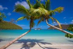 Palmeras Maho Beach en St John en las Islas Vírgenes de los E.E.U.U. imagen de archivo