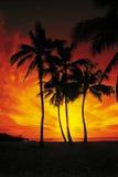 Palmeras mojadas en una puesta del sol roja y anaranjada Fotos de archivo libres de regalías