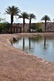 Palmeras por el lago Imagen de archivo