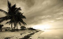 Palmeras por la playa imagen de archivo