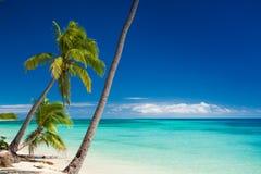 Palmeras que cuelgan sobre la playa tropical Fotos de archivo libres de regalías