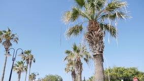 Palmeras que pasan por un cielo azul en el día soleado ventoso de Paphos Chipre almacen de metraje de vídeo