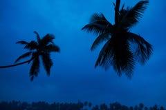 Palmeras que ponen en contraste contra un cielo azul brillante Palmeras en la playa fotos de archivo