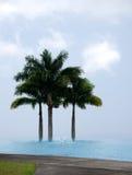 Palmeras reales detrás de una piscina del infinito en una plantación de café Imagen de archivo