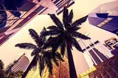 Palmeras rodeadas por los rascacielos Imágenes de archivo libres de regalías