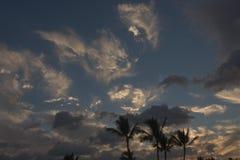 Palmeras silueteadas contra el cielo Fotos de archivo libres de regalías
