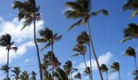 Palmeras tropicales Fotos de archivo libres de regalías
