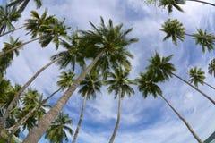 Palmeras tropicales Fotografía de archivo libre de regalías