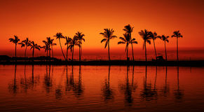 Palmeras tropicales de la puesta del sol de la playa del paraíso Fotos de archivo
