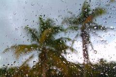 Palmeras tropicales de la tormenta del huracán foto de archivo