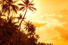 Palmeras tropicales en la puesta del sol imágenes de archivo libres de regalías