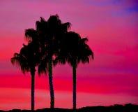 Palmeras tropicales en la puesta del sol de Silouette Fotos de archivo