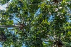 Palmeras verdes fotografía de archivo