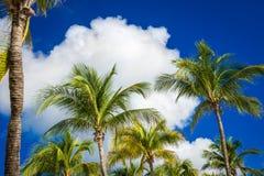 Palmeras verdes del coco en el cielo azul marino con las nubes blancas Fotografía de archivo libre de regalías
