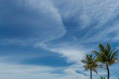 Palmeras verdes tropicales en Bali, Indonesia Fotos de archivo libres de regalías