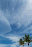 Palmeras verdes tropicales en Bali, Indonesia Fotografía de archivo libre de regalías