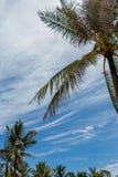 Palmeras verdes tropicales en Bali, Indonesia Foto de archivo libre de regalías