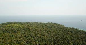 Palmeras verdes y zonas tropicales salvajes Tiroteo del aire, del abej?n metrajes