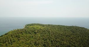 Palmeras verdes y zonas tropicales salvajes Tiroteo del aire, del abej?n almacen de metraje de vídeo
