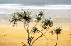 Palmeras, viento, océano Fotos de archivo