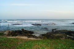 Palmeras, viento, océano Foto de archivo libre de regalías