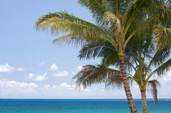 Palmeras y aguas tropicales Imagen de archivo